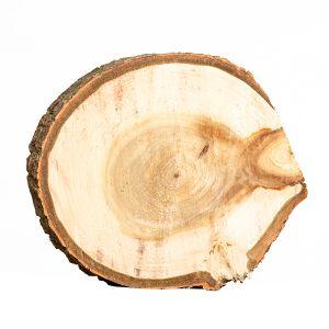 Untersetzer Baumscheibe D20 cm