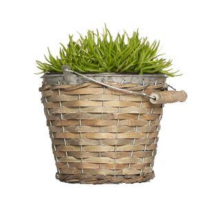 Pflanze Himalaya Gras